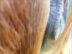 un perro le da por el culo a su dueña