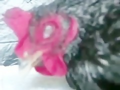 Orgia Canina (Pelicula)
