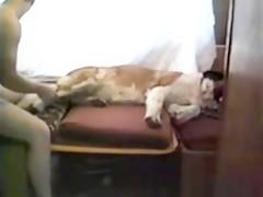 Bailando con perros