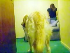 El perro tambien tiene derecho a follarsela
