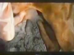 Pasandoselo Pipa con el novio y su perro