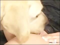Le comen el coño a la japonesa dos perros