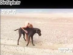 El perro la sabe meter