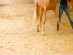 Se caga mientras la dan por el culo un caballo