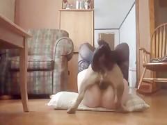 Corrida de perro