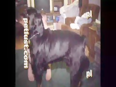 Weakness for the sex with horses