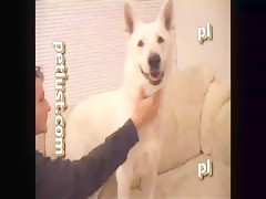 Video retro de zoofilia