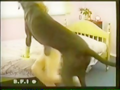 Dog masturbated by gay