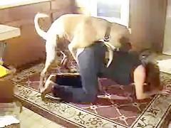 yoga with dog